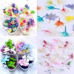 Vegyes szárított virágok köröm művészet DIY üveg palack dekoráció virág manikűr dekoráció