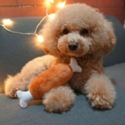 * 4 1PC csirkecomb csont (19cm) - * 4 1PC csirkecomb csont (19cm) Új kiskutya kutya macska fogászati fogak Egészséges fogak
