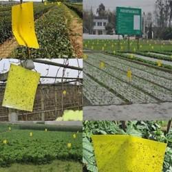 1 db Kültéri sárga ragadós ragasztó repülő pesti rovarpapírok csapdák fogók Bugs 1 / 5PCS