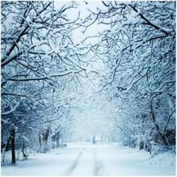 150x90cm-es Hangulatos havas út fákkal övezve háttér stúdió fotózáshoz - N0X5