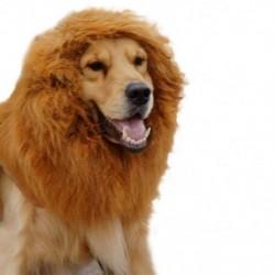 1X (házi kedvenc paróka oroszlán sörény K5U4)